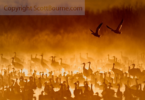 crains in fire mist Cranes In The Fire Mist: